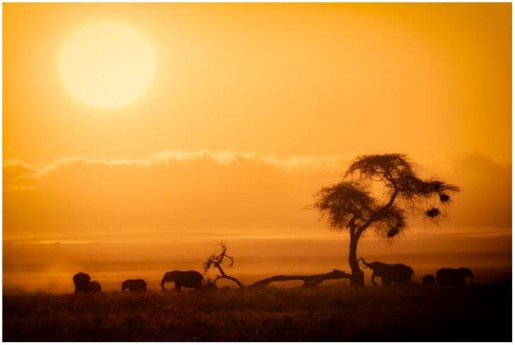 African Sunrise, Amboseli National Park