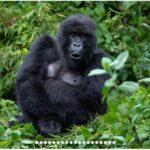 RWANDA, UGANDA & CONGO - CHRISTMAS ADVENTURE TOUR 2021