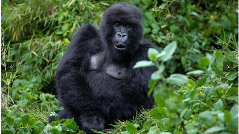 Rwanda, Uganda & Congo – Christmas Adventure Tour 2021