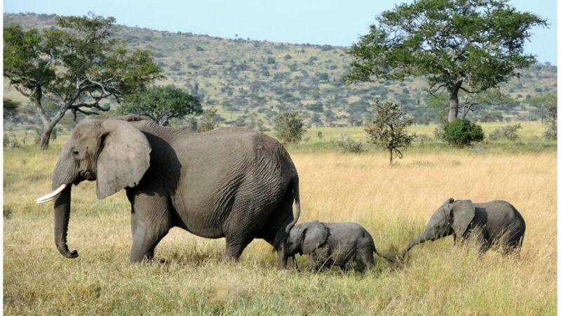 Sights in Tanzania