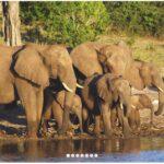 ZAMBIA - HOUSEBOAT SAFARI ON THE ZAMBEZI